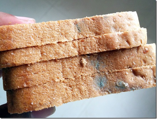 mold bread with fungus